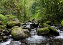 Large Rocks, Stones and Rapids along a Stream. Large Rocks and stone rapids along a deep green forest stream in the pacific northwest royalty free stock images