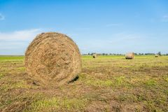 Large role of harvested grass in the foreground against a blue s. Large role of harvested grass in the foreground of recently cut grassland with multiple roles stock photo
