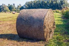 Large role of harvested grass in the foreground against a blue s. Large role of harvested hay in the foreground. The hay roll is wrapped with air-permeable mesh royalty free stock images