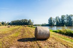Large roll of harvested grass in the foreground of a large field. Large roll of harvested hay in the foreground. The hay roll is wrapped with air-permeable mesh royalty free stock photos