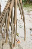 Large roots. Solid sand. Beach. Wet sand. Big brown branches Royalty Free Stock Photography