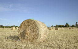 Large Round Bale of Hay in Field. Royalty Free Stock Image