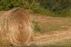 Large Round Bale of Hay Stock Image