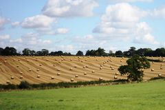 Large round bales in a field in rural farmland Stock Images