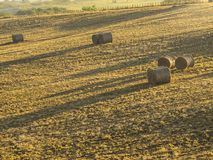 Large round bales of hay laying in a crop field stock photo