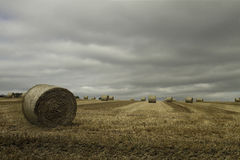 Large round bales of straw Stock Images
