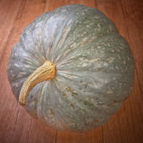Large round gourd whole tail Stock Photos