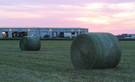 Large round green hay bales at sunset Royalty Free Stock Photo