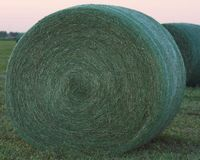 Large round green hay bales at sunset Royalty Free Stock Image