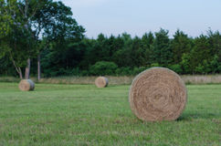 Large round hay bale in field Stock Photography