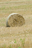 Large round hay bale Royalty Free Stock Images