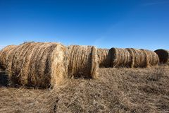 Large round hay bales and blue sky. Royalty Free Stock Photos