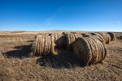 Hay bundles in the field. Stock Photography