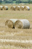 Large round hay bales Stock Photography