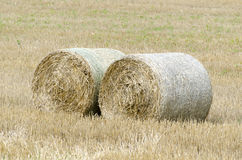 Large round hay bales Royalty Free Stock Image