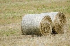 Large round hay bales Stock Image