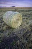 Large round hay bundle in a field. Royalty Free Stock Photo