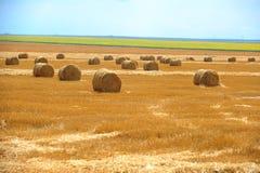 Large round straw bales Stock Images