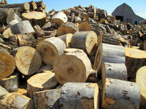 Large round tree stumps. Piles of large round tree stumps used to cut into logs for firewood Royalty Free Stock Photo