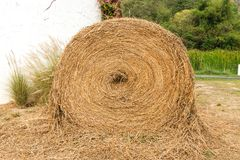 Large rounded hay stack on green grass Stock Photography