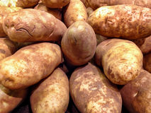 Large Russet Potatoes Royalty Free Stock Images