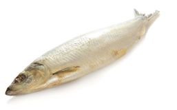 Large salty fish Royalty Free Stock Photography
