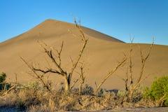 Large sand dune and tree sunrise Stock Photography