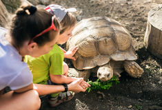 Large sand turtle and boy. Large sand tortoise and a little boy with his mother Royalty Free Stock Photos