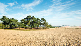 Large sandy nature reserve early in the morning Stock Photos