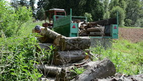 Large sawn logs worker. Forester working in the wood pile on a trailer large sawn logs stock video