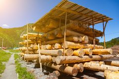 Large sawn round pine trees are laid in a pile for preparation of the production of building materials and the construction of royalty free stock photography