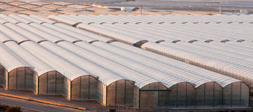 Industrial greenhouse to grow off-season veggies. Large scale commercial greenhouse structures cover endless areas Royalty Free Stock Photos