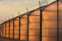 Large scale industrial greenhouse lit by sunet Royalty Free Stock Photography