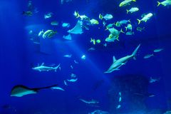 Large scale sealife oceanarium with many species of underwater a. Nimals in a zoological aquarium royalty free stock image