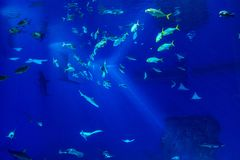 Large scale sealife oceanarium with many species of underwater a. Nimals in a zoological aquarium royalty free stock images