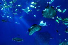 Large scale sealife oceanarium with many species of underwater a. Nimals in a zoological aquarium stock images