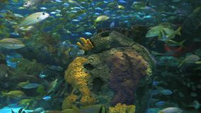 Large schools of fish swimming by a coral reef. Large schools of fish swimming in a coral reef stock footage