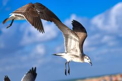 Large sea bird Albatross flies over the sea Stock Photo
