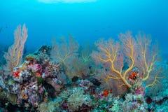 Large sea fan and marine life in Wakatobi National Park, Indones. Ia Royalty Free Stock Photos