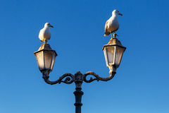 Large sea gull in the morning. In the port Stock Image