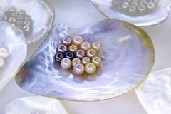 Multiple pearls in sea shell Royalty Free Stock Images
