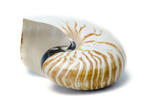 Large sea shell Stock Photo