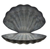 Large Sea Shell Royalty Free Stock Images