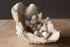 Large sea shell filled with snails on marble table top Royalty Free Stock Photography
