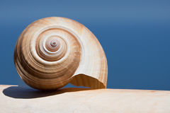 Large Sea Shell Swirl on a white wall Royalty Free Stock Images