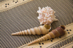 Large Sea shells over textile background Royalty Free Stock Photos