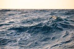 Large sea waves at sunset closeup Royalty Free Stock Photography