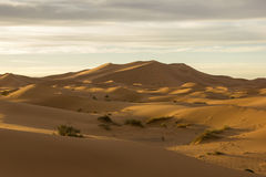 Large Seas Of Dunes Of Erg Chebbi In Morocco. Large seas of dunes of Saharan Erg Chebbi near the Merzouga village in the southeastern Morocco Stock Images