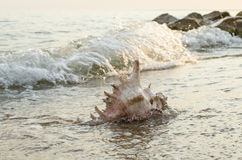 Large seashell on the background of the sea shore Stock Photography