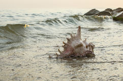 Large seashell on the background of the sea shore Royalty Free Stock Image